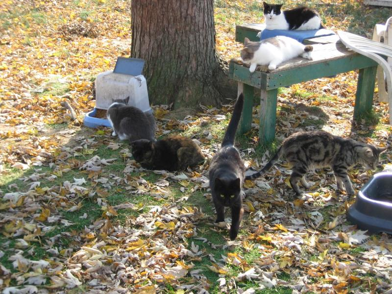 The Good Shepherd Cat Sanctuary Our Feral Colony
